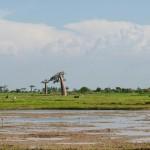 paysage de baobabs