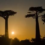 soleil couchant de l'avenue des baobabs