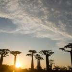 au soleil couchant de l'allee des baobabs